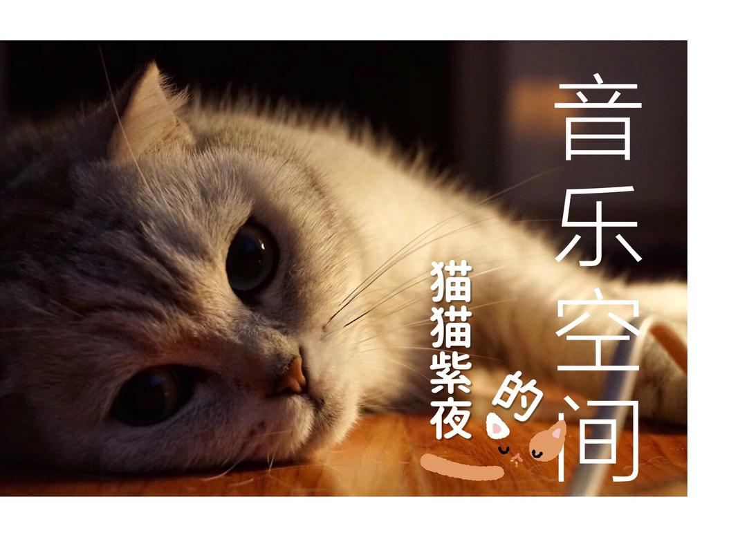 猫猫紫夜的音乐空间
