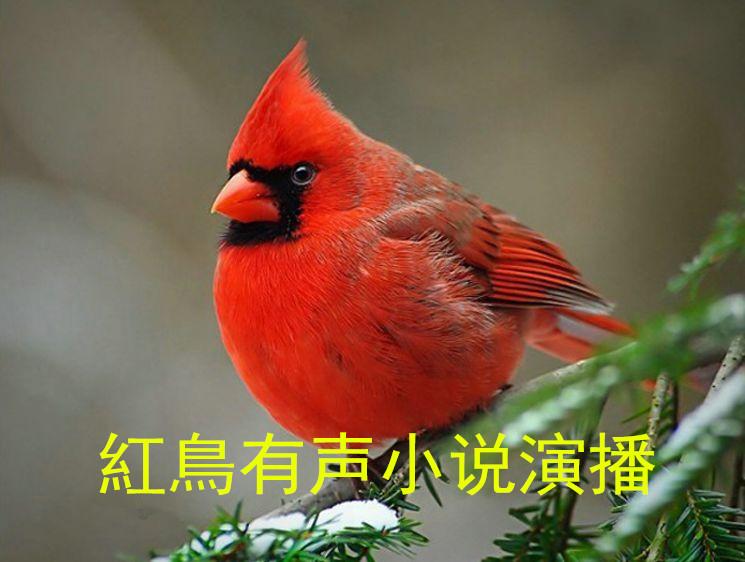 红鸟有声小说演播
