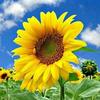 向阳花心理咨询室