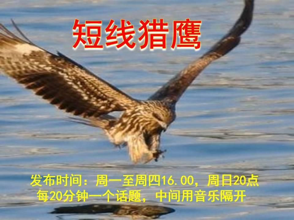 短线猎鹰(开悟讲堂)