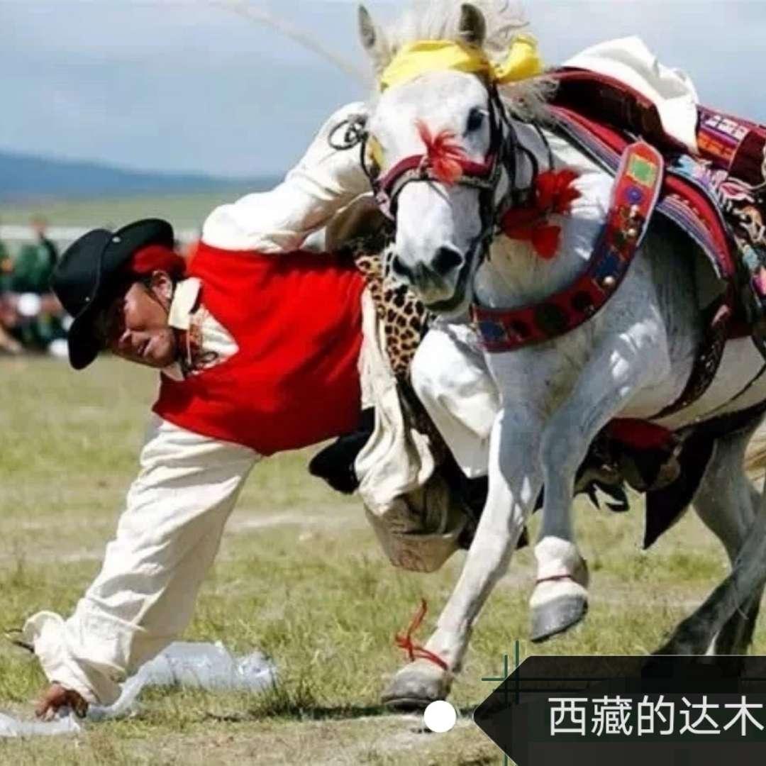 达木人,西藏的一个蒙古部落