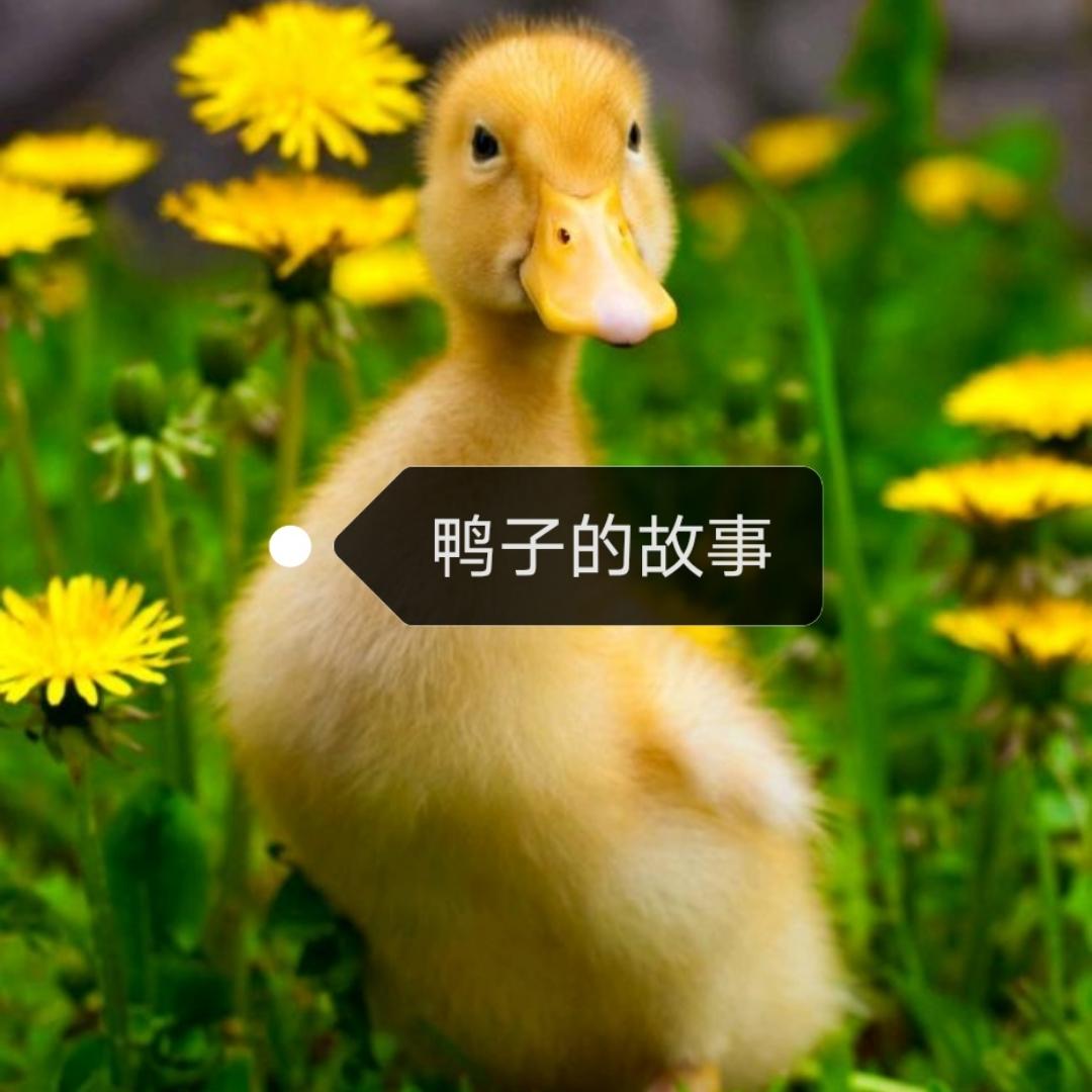 鸭子的故事