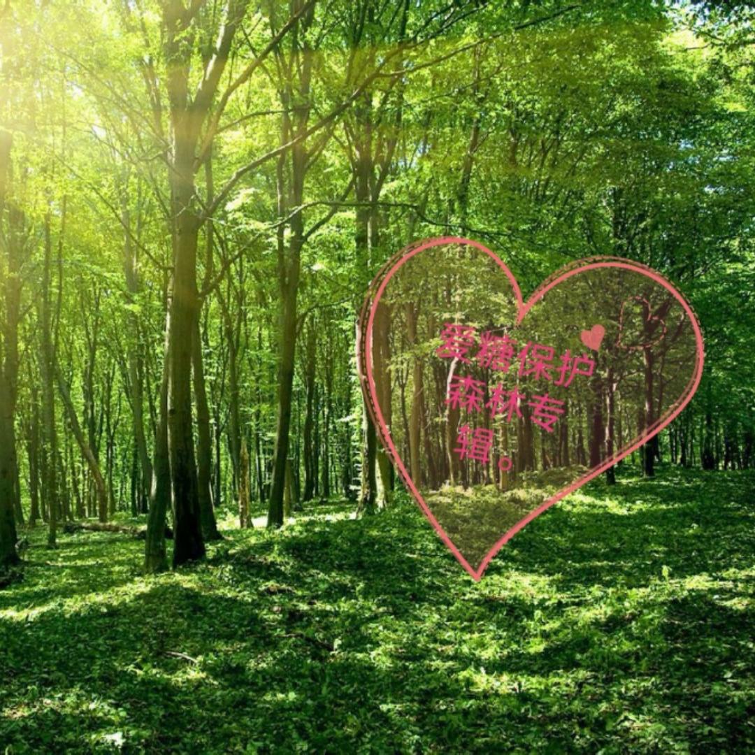 爱糖,保护森林专辑。