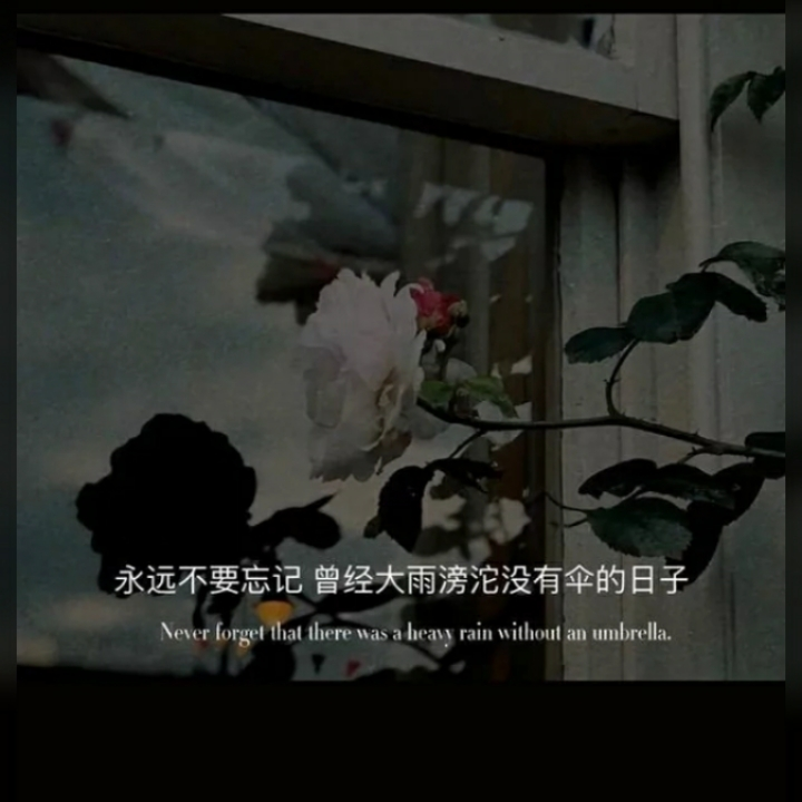 开在裂缝的花