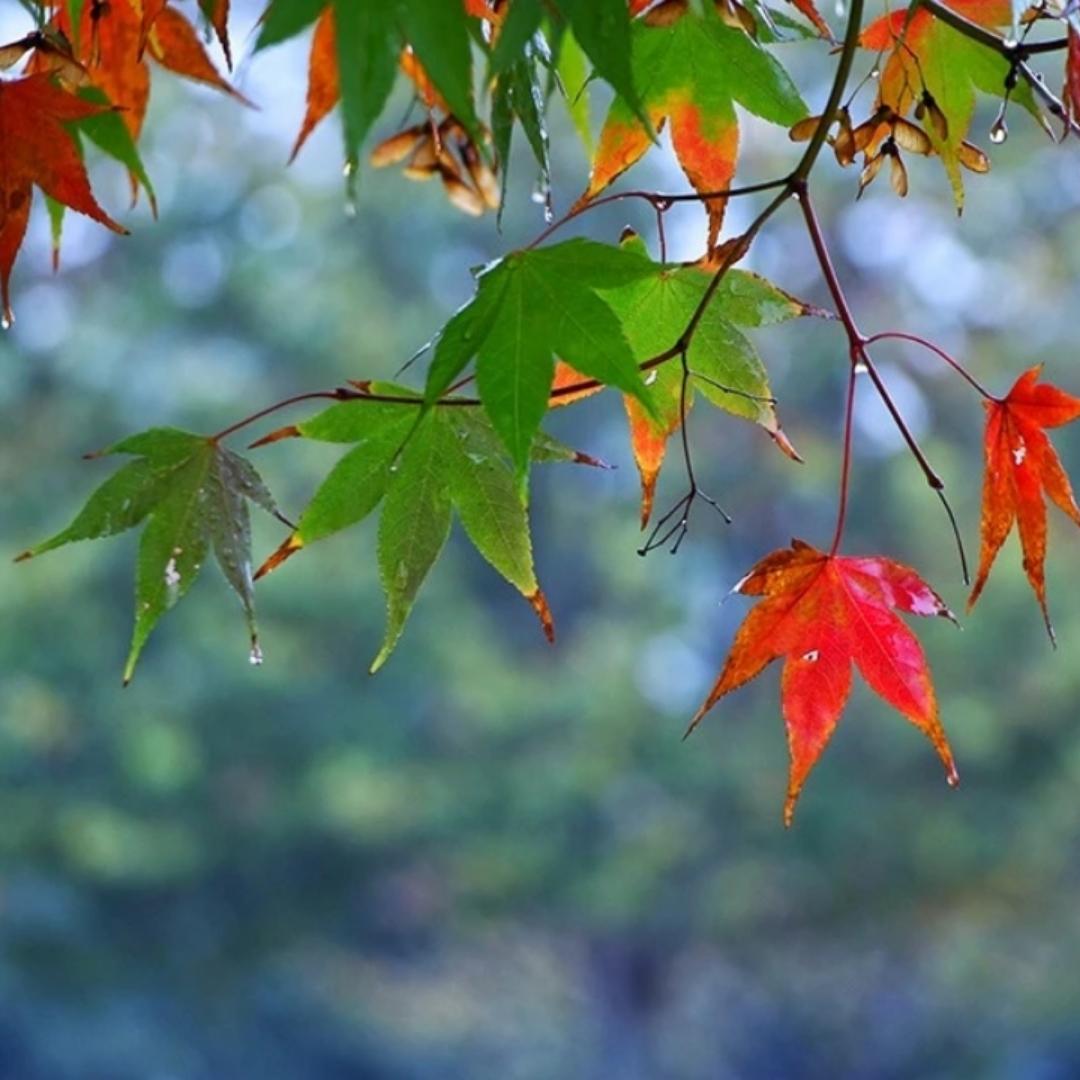 如夏花灿烂,如秋之静美